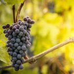 Sierpień w ogrodzie: czas zbioru warzyw i owoców sezonowych